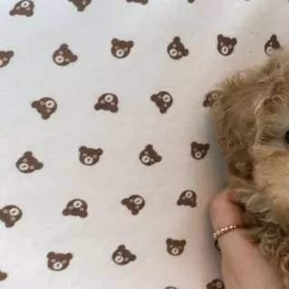 Maltipoo Puppies Are Still Available To Go